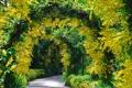 Картинка деревья, цветы, растения, Сингапур, арки, ботанический сад