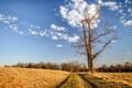 Картинка пейзаж, дорога, дерево