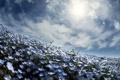 Картинка небо, цветы, весна