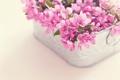 Картинка цветы, корзина, букет, розовые