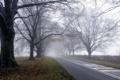 Картинка дорога, деревья, пейзаж, туман, утро