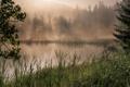Картинка лес, трава, деревья, туман, озеро, камыши, рассвет