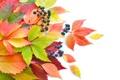 Картинка осень, листья, ягоды, листва