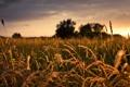 Картинка природа, капли, свет, трава