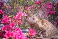 Картинка кошка, цветы, природа, весна, кусты, рододендрон