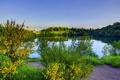 Картинка зелень, трава, пейзаж, природа, река, берег, кусты