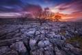 Картинка небо, деревья, камни