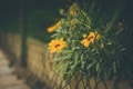 Картинка ограда, желтые, сетка, лепестки, забор, цветы