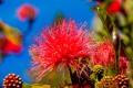Картинка природа, цветок, экзотика, небо