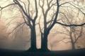Картинка деревья, природа, туман, парк, сквер
