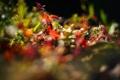 Картинка макро, лучи, свет, цветы, природа, фото, фон