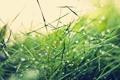 Картинка трава, капли, grass, drops