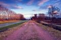 Картинка дорога, поле, небо, облака, деревья, Вечер