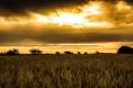 Картинка поле, ночь, небо