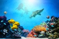 Картинка рыбки, акулы, подводный мир, underwater, ocean, fishes, tropical