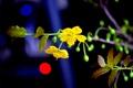 Картинка цветок, свет, ветка, стебель, блик