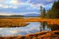 Картинка осень, лес, трава, озеро, Acadia, National park, Main