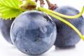 Картинка макро, синий, ягоды, чёрный, berry, виноград, black
