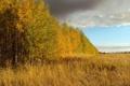 Картинка поле, небо, деревья, пейзаж, природа, Осень, березы