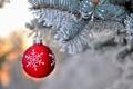 Картинка зима, снег, ветки, красный, природа, игрушка, шар