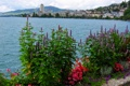 Картинка цветы, город, озеро, Швейцария, набережная, Женева, Geneva