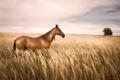 Картинка природа, поле, конь