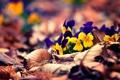 Картинка листья, макро, цветы, незабудки