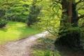 Картинка лес, деревья, ветки, ствол, тропинка, плющ