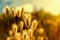 Картинка блики, растение, боке