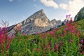 Картинка небо, облака, пейзаж, цветы, горы, Германия