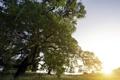 Картинка поле, лето, свет, природа, дерево