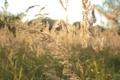 Картинка поле, осень, трава, солнце, макро, природа, красота