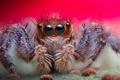 Картинка глаза, фон, паук, волосики, джампинг