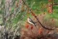 Картинка ягоды, птица, ветка