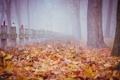 Картинка осень, листья, деревья, туман, кресты, могилы, кладбища