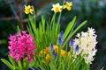 Картинка листья, лепестки, сад, стебель, клумба