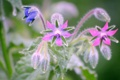 Картинка цветок, капли, природа, роса, растение, лепестки