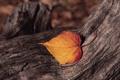 Картинка лист, дерево, кора