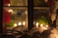 Картинка зима, настроение, праздник, окно