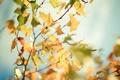Картинка осень, листья, солнце, макро, лучи, деревья, ветки