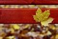 Картинка осень, капли, скамейка, желтый, лист, дождь, осенний