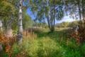 Картинка лето, трава, деревья, листва