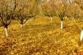 Картинка осень, листья, деревья, сад