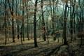 Картинка листья, лес, парк, деревья, прошлогодние
