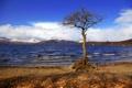 Картинка небо, горы, озеро, дерево, Шотландия, Лох-Ломонд