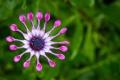 Картинка цветок, зелень, ярко