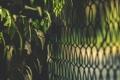 Картинка листья, забор, куст, ограда, зеленые