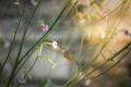 Картинка цветы, птица, растения, колибри