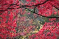 Картинка листья, осень, ветки, деревья, багрянец