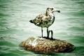 Картинка животные, вода, птица